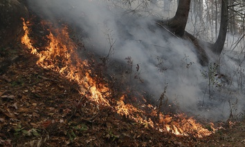 Tennessee, North Carolina and Georgia are among the Southeastern states that have been impacted by wildfires this fall.