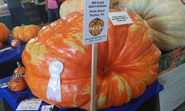 The 3rd place pumpkin at the Washington State Fair was 894 pounds!