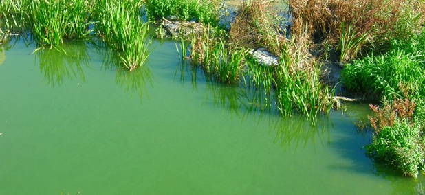 An algae bloom.