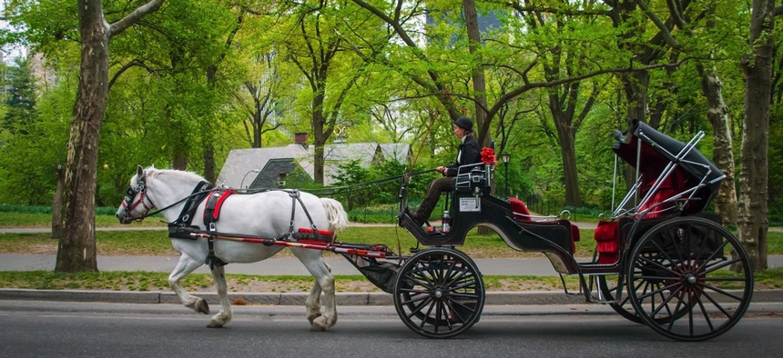 A horse carriage in Central Park