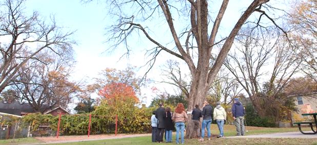 Keep Durham Beautiful tree banding