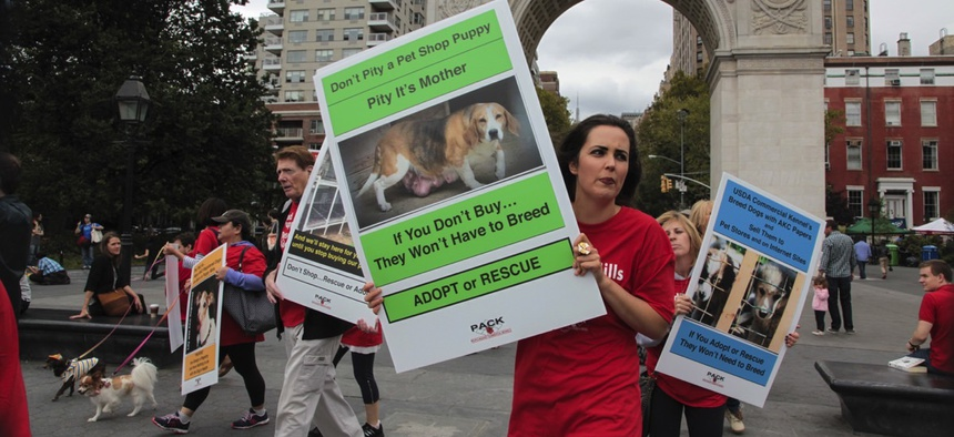 People Against Commercial Kennels, PACK, marched through the West Village to rally in Washington Square against puppy mills & pet stores that sell the offspring.