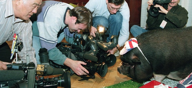 "Photographers gather around ""Porky"" the pig during a news conference held by the Citizens Against Government Waste in Washington, D.C., Wednesday, Feb. 15, 1995."