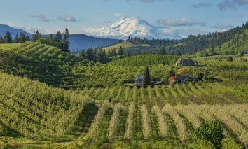 The Hood River valley in Oregon is a top producer of apples, pears, and cherries.