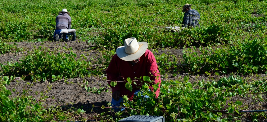 Agricultural workers in Kern County, California.