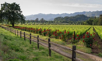 Calistoga, California