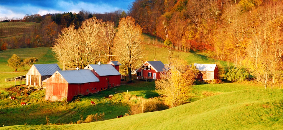 A group of red barns, just outside of Reading, Vermont
