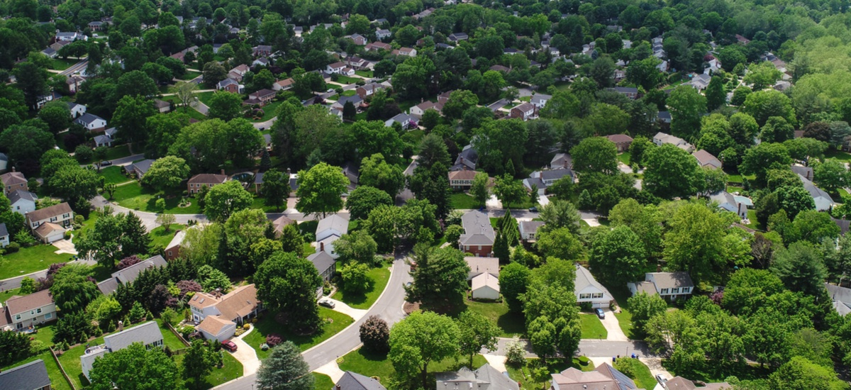 Throwing Shade: Reducing Urban Temperatures by Planting Trees