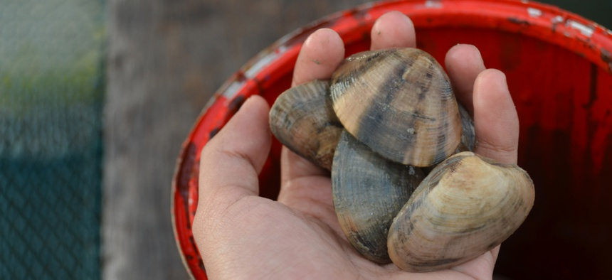 The hope is that clams can help filter out the red tide.