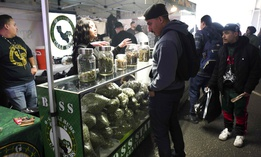 In this Saturday, Dec. 29, 2018 photo a bud tender offers cannabis by Boss Status Genetics from a display filled with large bags of marijuana during Kushstock 6.5 festival in Adelanto Calif.