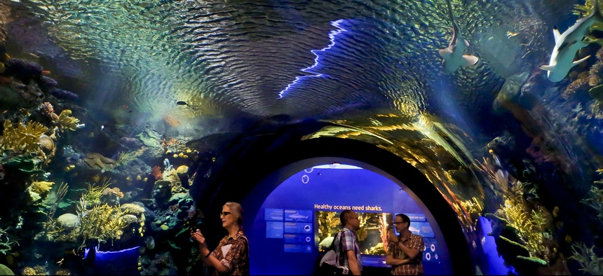 Visitors walk through an immersive underwater tunnel that features a coral reef ecosystem with sharks at the New York Aquarium.