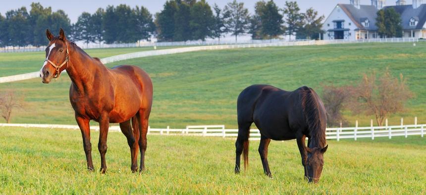 A horse farm in Lexington, Kentucky.