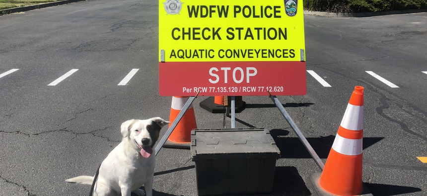 Puddles inspects boats at official checkpoints, sitting when she smells mussels or their larvae.
