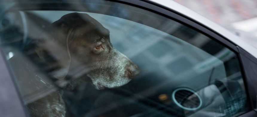 Thirty-one states and Washington D.C. have laws that address animals left unattended in cars.