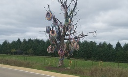 The hula hoop tree in Jones County, Iowa has attracted notoriety from tourists and locals alike.