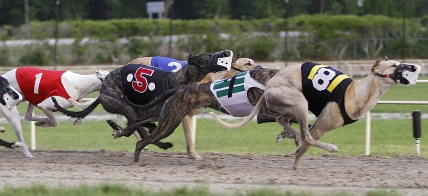 Once legal in 19 states, greyhound racing happens only in six.