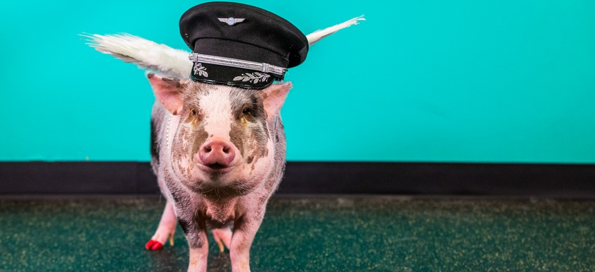 LiLou, a Juliana-breed pig, is a member of San Francisco International Airport's Wag Brigade.