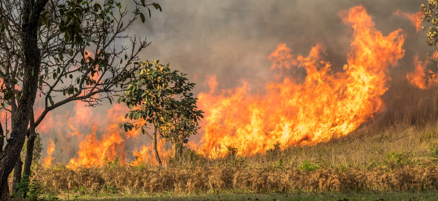 Invasive grasses are novel fuels that can act as kindling in an ecosystem where readily flammable material might not otherwise be present.