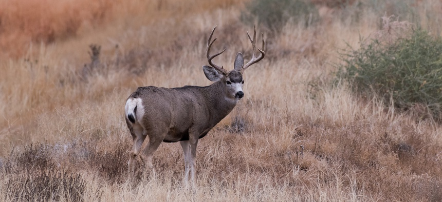 Bloated deer populations come with a long list of concerns, including increased risks of vehicle collisions, higher rates of disease transmission among deer herds, and even decreases in songbird populations.