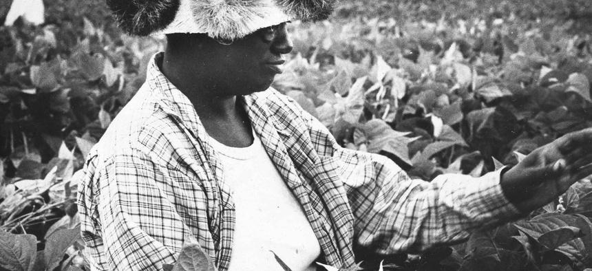 A Black woman works in a field near Trenton, N.J. in August 1966.